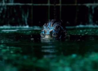 guillermo-del-toro-s-creature-in-dreamy-the-shape-of-water